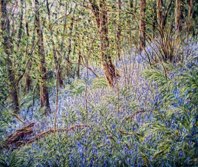 Bluebell Woods in the Afternoon Light, South Wales. Tessa Perceval.