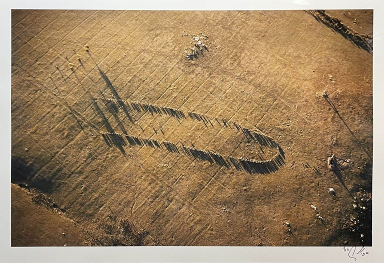Sheep, Afternoon Aerial 2004. John Gollings.