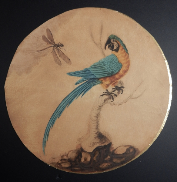 Blue and Gold Macaw and Dragonfly. Sarah Stone.