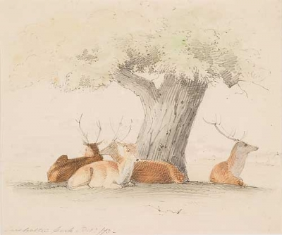 Deer Resting Casterton Park 1873. William Strutt.