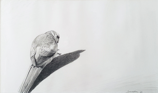 Study of a Mallee Ringneck 1986. Peter Trusler.