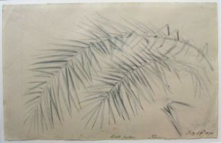 Date Palm, Kew, July 29th 1878. William Strutt