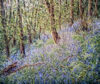 Bluebell Woods in the Afternoon Light, South Wales. Tessa Perceval