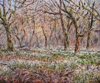 Snowdrops in the Orchard, South Wales. Tessa Perceval