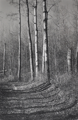 Track Through the Woods. Peter Brown