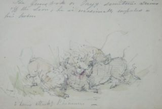 Lions attacking a Rhinocerus. William Strutt