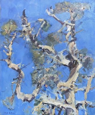 Paperbark Tree, Perth. Nick Botting