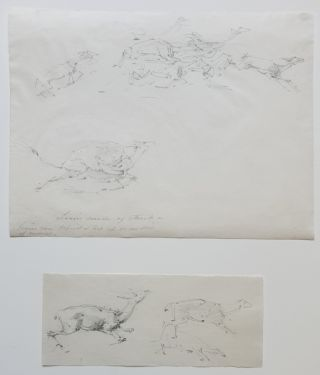Lions Mode of Attack, Two Studies. William Strutt
