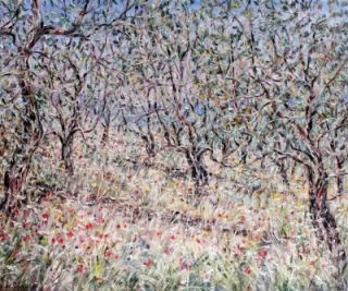 Olive Grove in Spain. Tessa Perceval