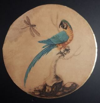 Blue and Gold Macaw and Dragonfly. Sarah Stone