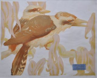Kookaburras 1934. Murray Griffin