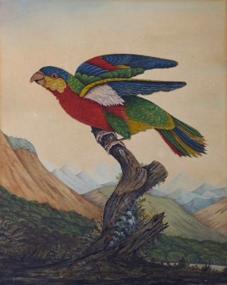 Parrot Perched in a Mountainous Landscape circa 1800-1820. British School