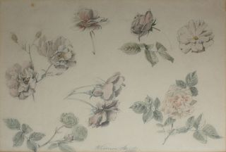 Study of Roses 1887. William Strutt