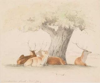 Deer Resting Casterton Park 1873. William Strutt
