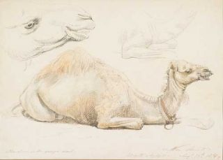 The Younger Camel 1878. William Strutt
