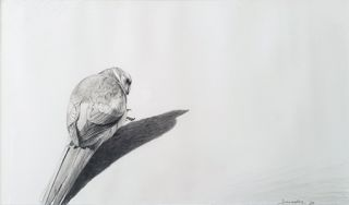 Study of a Mallee Ringneck 1986. Peter Trusler